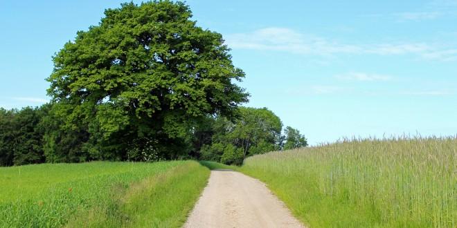 Nordic Walking Schuhe - Eine Strecke finden